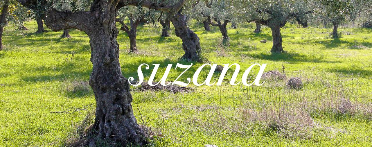 Suzana – Huile d'olives extra vierge AB de Laconie – Olives noires Kalamon & Tapenade – Miel de thym