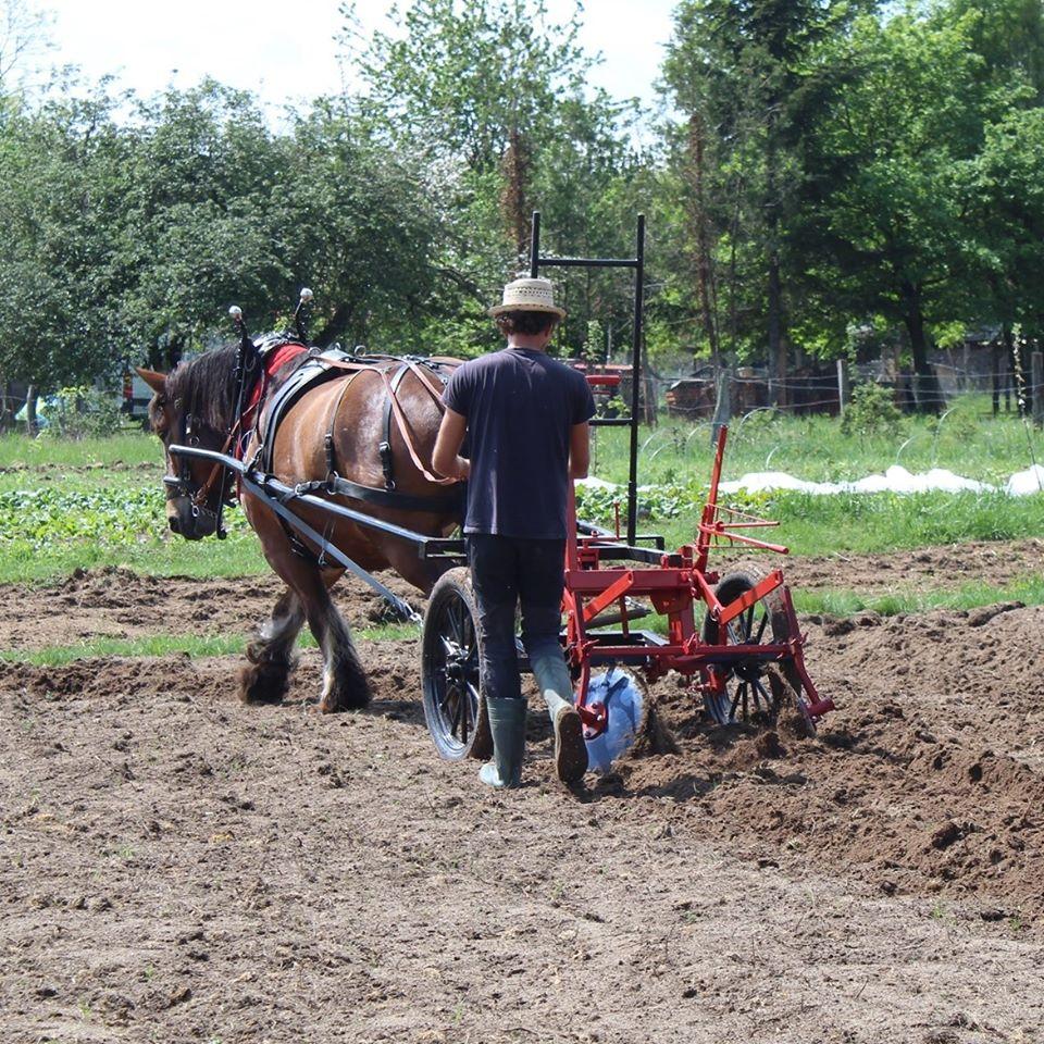 Kevin Guerreiro – Les Jardins de Vinzelles – Légumes AB au détail